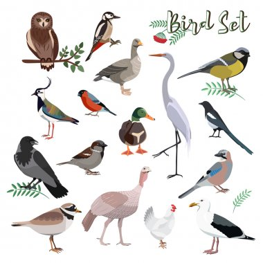 Bird set cartoon colorful vector illustration. Educational material