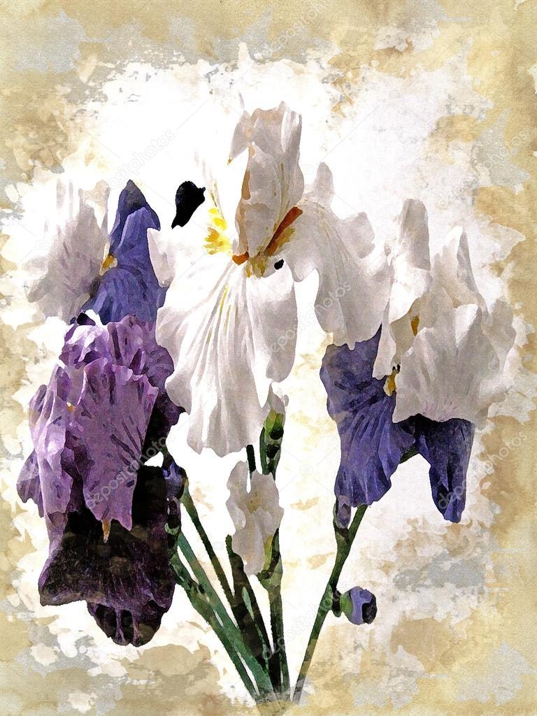 A bouquet of flowers - irises, white, blue, purple