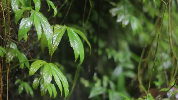 Dschungel-Natur. Wasserfälle und Pflanzen.