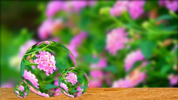 Odraz lantana barevné růžové kytice květiny kvetoucí vše v zahradě rozmazané pozadí na staré dřevo na křišťálové koule sklo