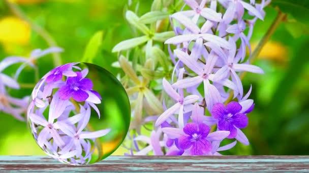 Reflexe věnec Puple, Sandpaper Vine, Petrea Volubilis L je uspořádán jako okrasná rostlina s květy s kmenem vinné révy a větví do velkého keře Indigo kvetoucích větví