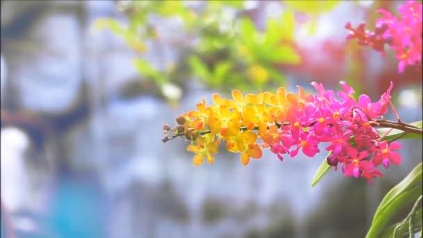 bíbor narancs sárga orchidea virág virágzik és sárga zöld levelek és elmosódott kék vízesés háttér