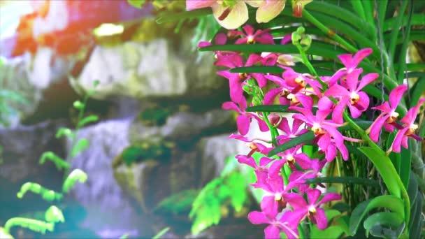 rosa Orchideenblume blüht und grüne Blätter und verwischen blauen Wasserfall Hintergrund