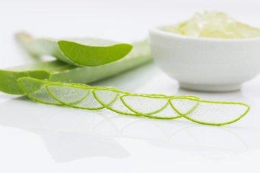 aloe vera fresh leaf  water can help neutralize free radicals Co
