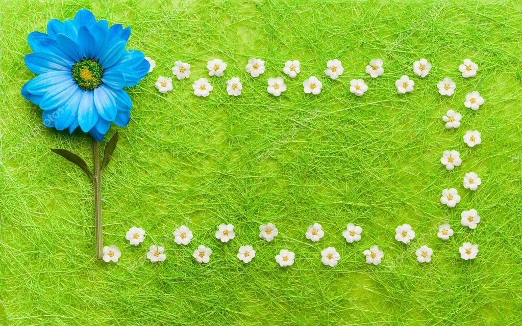 Blaue und weiße Blumen auf grünem Hintergrund. Blühende Konzept ...