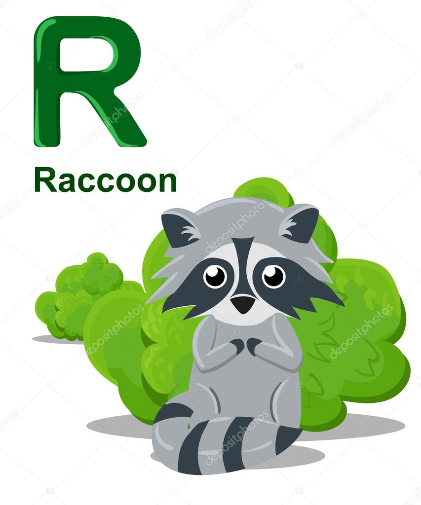 Alphabet for children. Cute vector zoo alphabet with cartoon animals isolated on white R raccoon