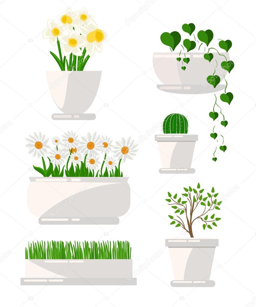 Illustration de houseplants succulents maison fleurs plante dintérieur en pot jeu
