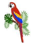 Papoušky kreslené vektorové ilustrace. Papoušek sada exotických ptáků