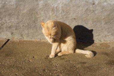 Pretty cat posing