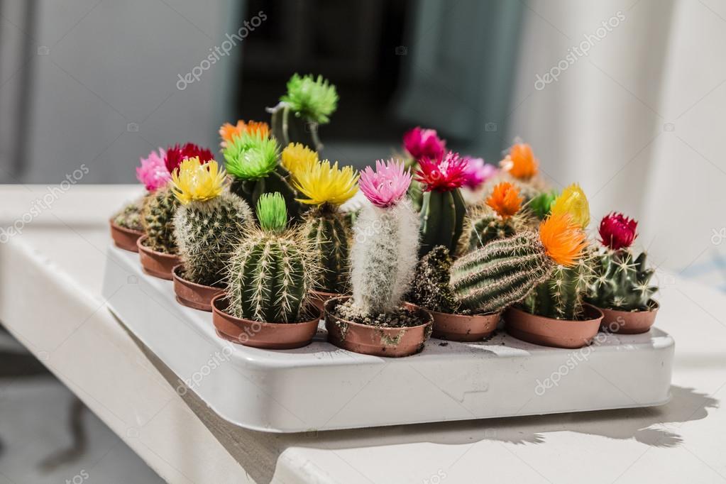 Diferentes tipos de cactus con flores en mesa blanca for Clases de cactus