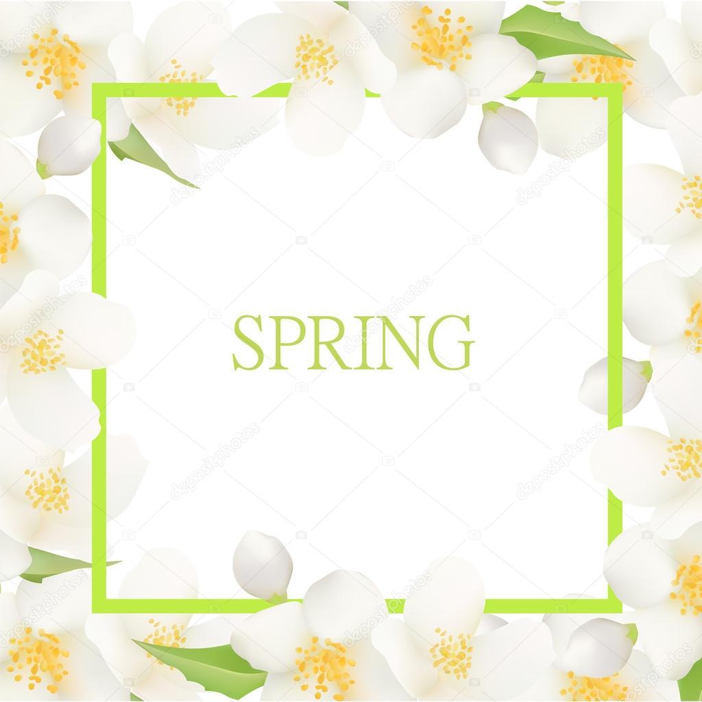 Fresh Summer Background with Jasmine White Flowers. Design Eleme