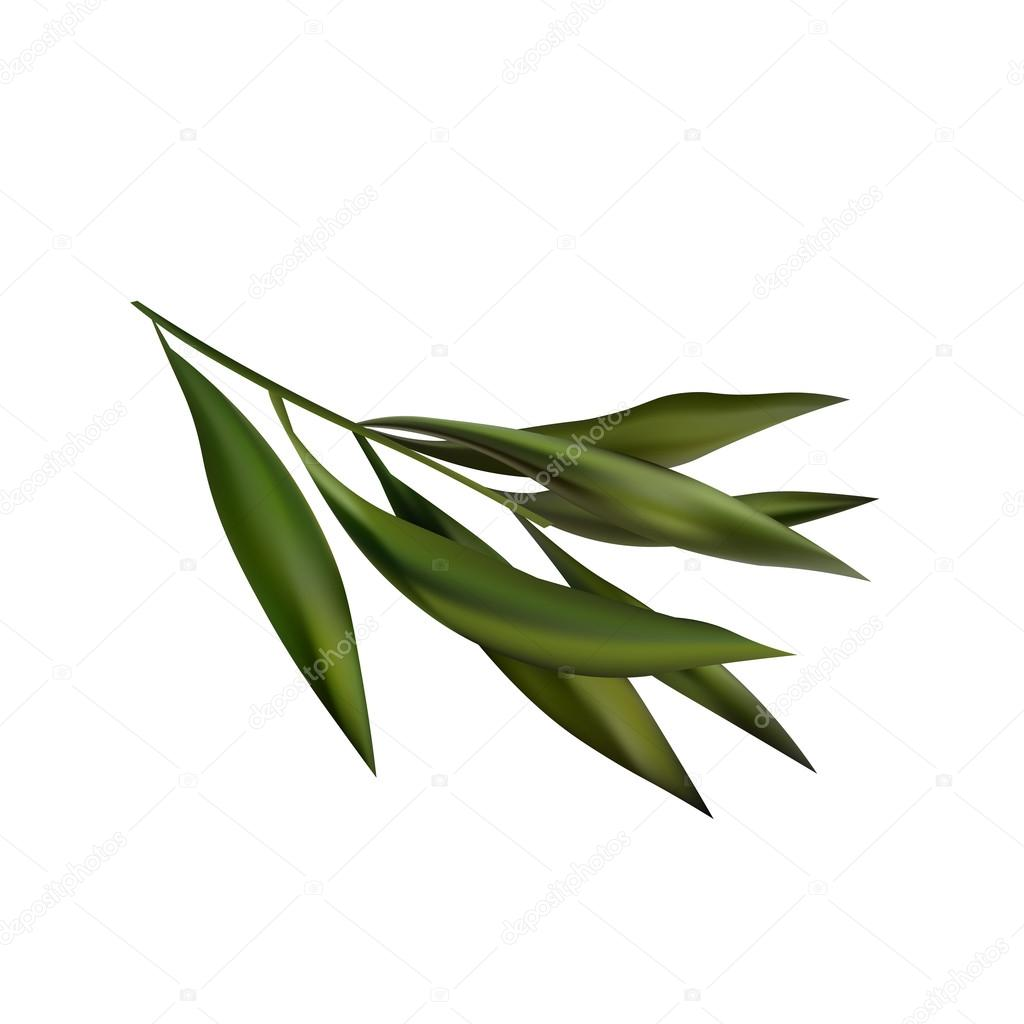 Tea Tree Realistic Branch Icon.  Object Isolatet On White Backgroud