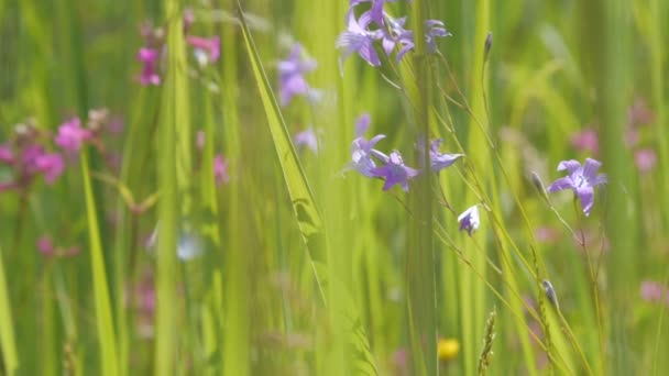 Meadow and flowers swaying in wind