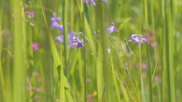 Dolly nyilallt a napsütötte zöld réten fű és a virágok