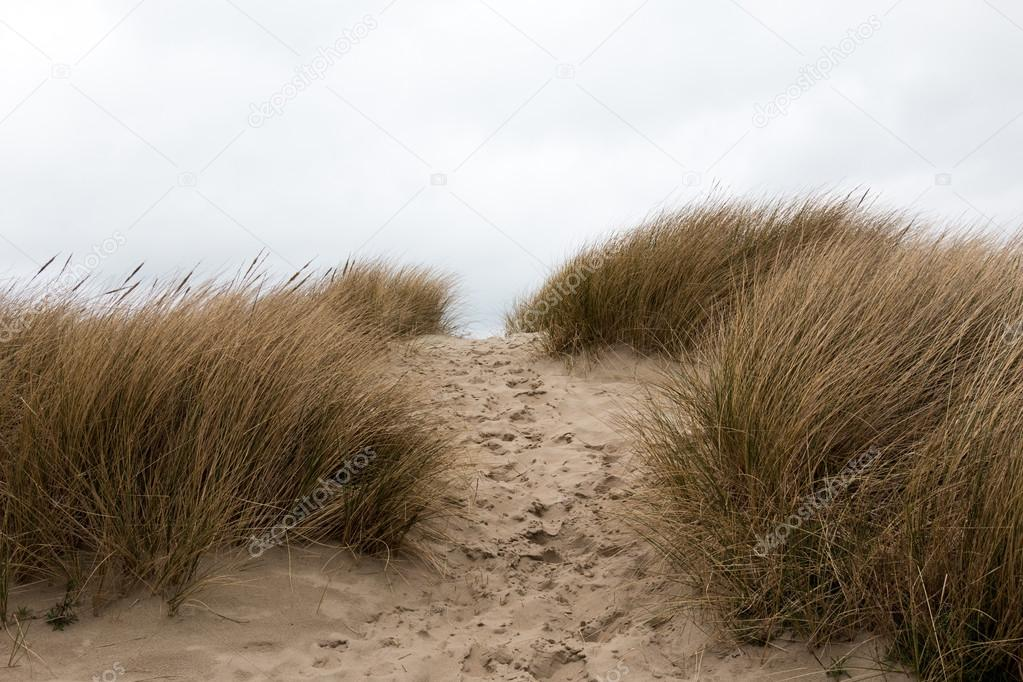 Footsteps in the sand in between sandy grass dunes