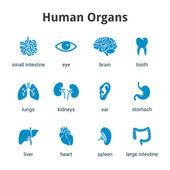 Fotografie Ikona modré lékařské lidské orgány na bílém pozadí