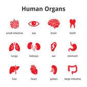 Fotografie Sada ikon lékařské lidské orgány