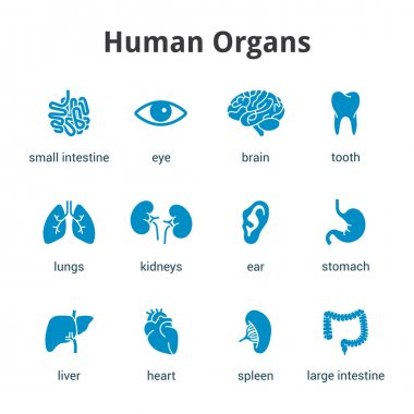 Blue medical human organs icon set on white background