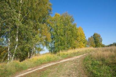 Autumn landscape with birches.