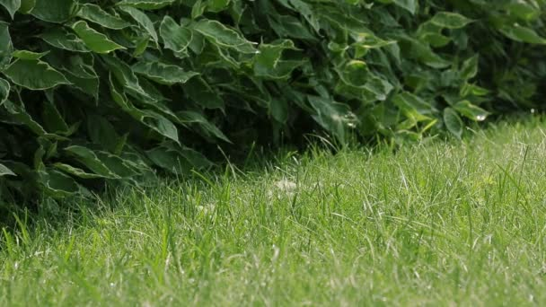 sekačka seká trávu