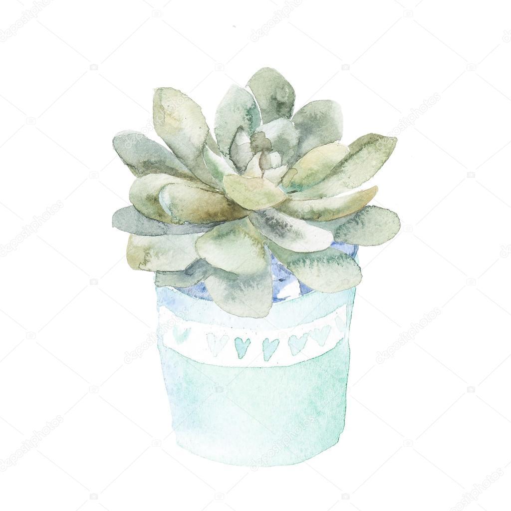 Succulent home plant.