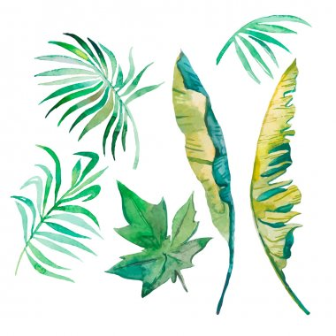 Watercolor palm leaves, banana leaves,papaya leaves isolated on white.
