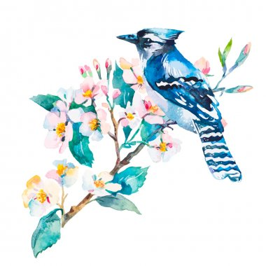 Blue jay isolated on a white background. Spring flowers.Watercolor.Vector.