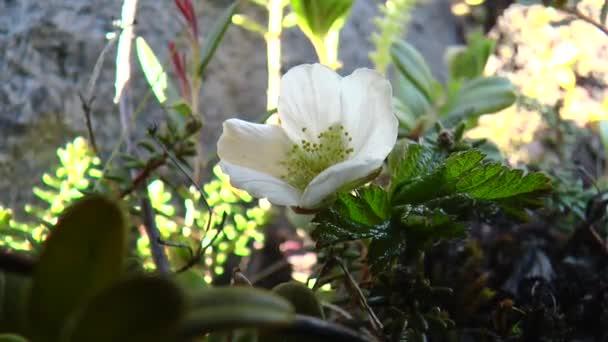 Květ severní rostliny