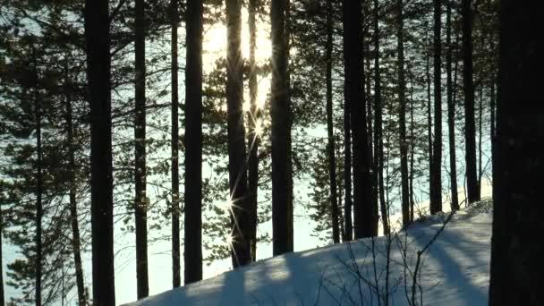 Světlo odráží ve vodě slunce objeví skrz borovice