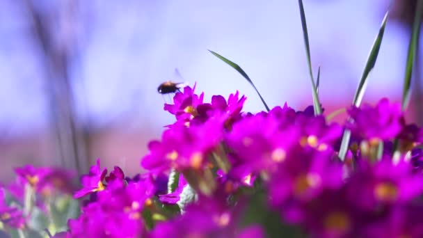 Bumble Bee Slow Motion