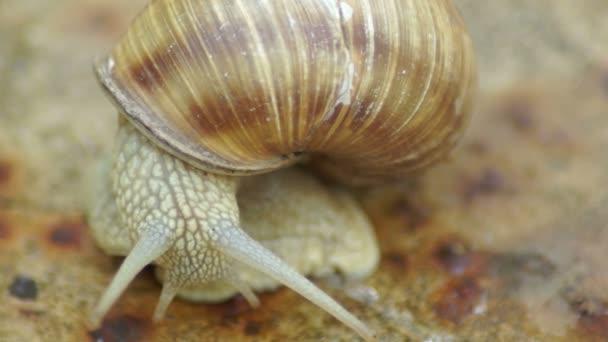 Snail handled antennas