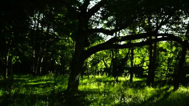 Lesa Les, stromy pozadí, zelené přírody krajiny, divočiny, srpen, pan