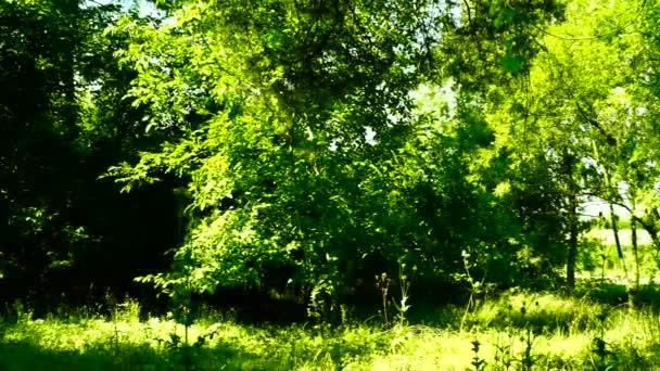 Grove, lesy Les, stromy pozadí, zelené přírody krajiny, srpen, pan