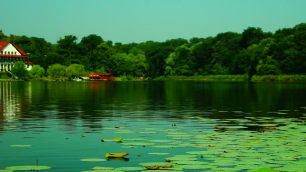 Lotus listy a květy (Nelumbo Nucifera) na vlnící se jezero, Pan