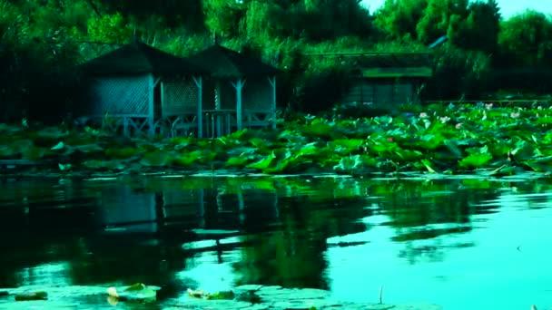 Klidný jezerními krajinu s lotosové listy, hypnotické vlny