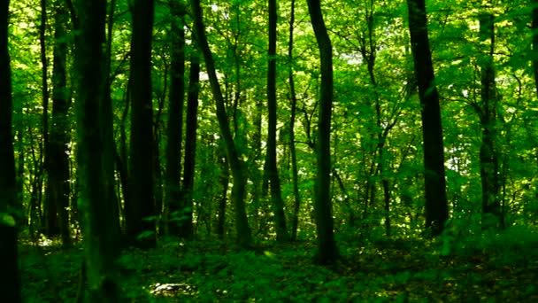 Lese lesa, stromy pozadí, zelené přírody krajiny, zvuk, vznešené, pan, padajícího listí