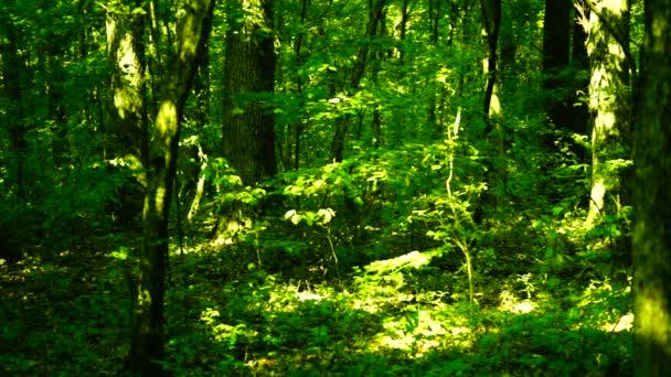 Lesa Les, stromy pozadí, zelené přírody krajiny, slunné grove, srpen, pan