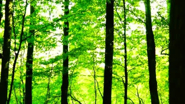 Lese lesa, stromy pozadí, zelené přírody krajiny, letní slunovrat, pan