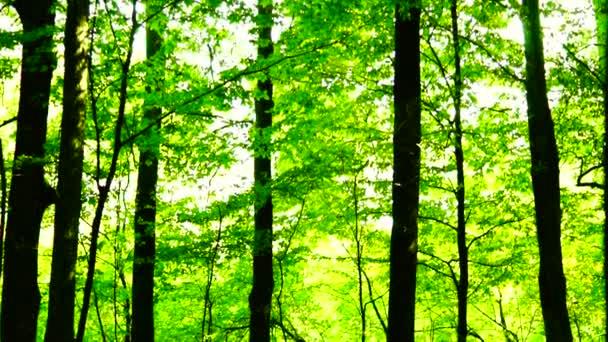 Woods Les, stromy pozadí, zelené přírody krajina svatojánské, tilt nahoru