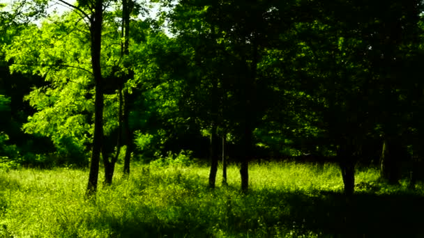 Woods forest, trees background, green nature landscape, sunny grove, august, pan