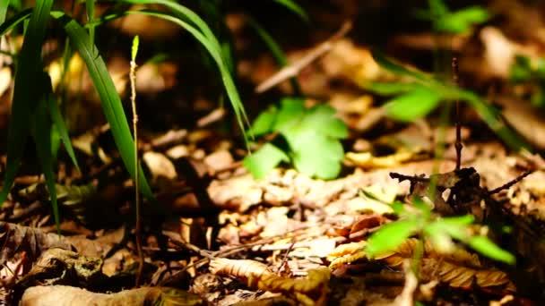 Lesní půda s spadané listí a malý stromek, pan