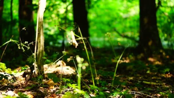 Lesy lesní stromy, zelené přírody krajiny, slunečních paprsků, pozadí zvuk, vznešené, pan