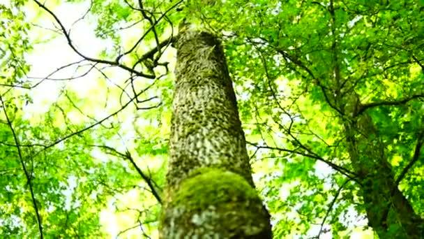 Napfény buja magas erdő szűrése.
