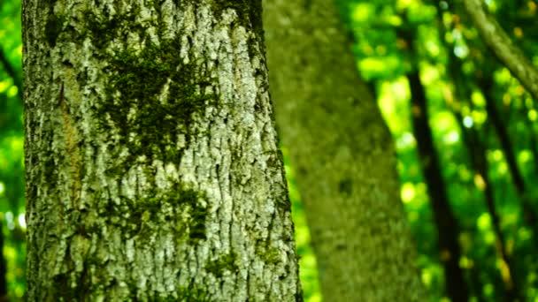 Lesa Les, stromy pozadí, zelené přírody krajiny, sluneční paprsky, srpen, pan