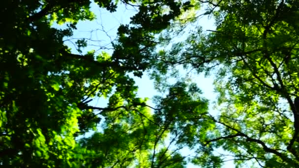 Sunny grove, lesy lesů, otočit, stromy, zelené přírody krajiny, pánev, zvuk