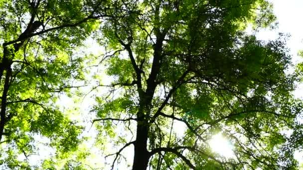 Sunny grove, lesy lesní, otáčení stromy, zelené přírody krajiny, odlesk objektivu