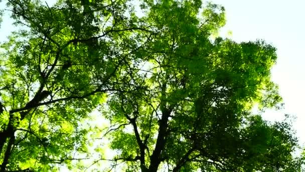 Sunny grove, lesy lesů, otočit stromy, Zelená příroda,