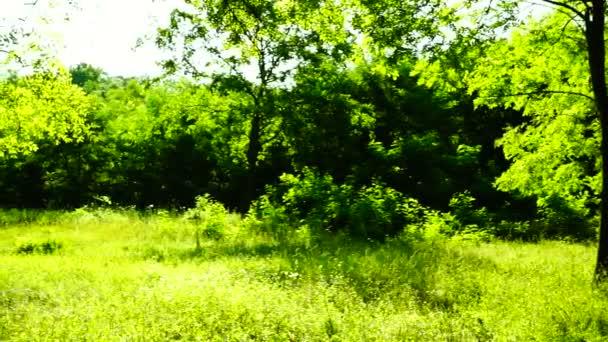 Sunny grove, lesy lesů, otočit, stromy, Zelená příroda, pan