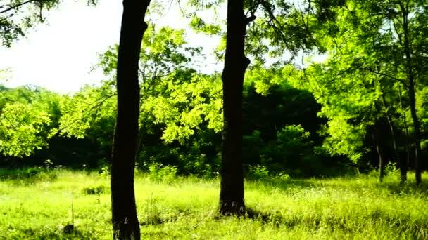 Sunny grove, lesy lesů, otočit, stromy, Zelená příroda, panoramatický záběr