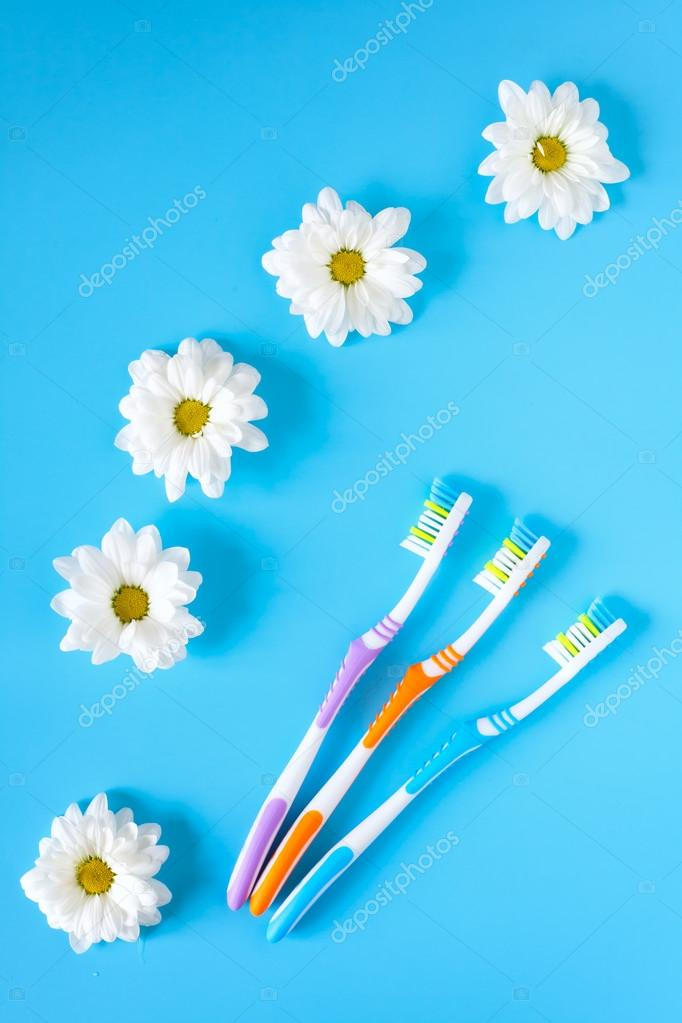 Three toothbrushes and chamomile flowers on a blue background. You and me.  The concept of natural cosmetics. View from above. Healthy lifestyle